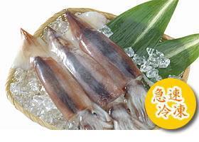 いかそうめんに使うスルメイカは新鮮なイカを急速冷凍しております。