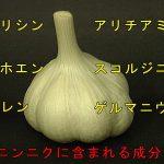 no017-3p-y